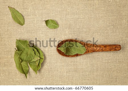Bay leaves on wooden spoon on natural background - top view. - stock photo