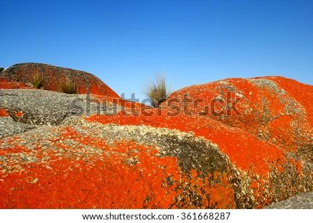 bay of fires tasmania - stock photo