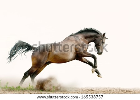 bay stallion plays - stock photo