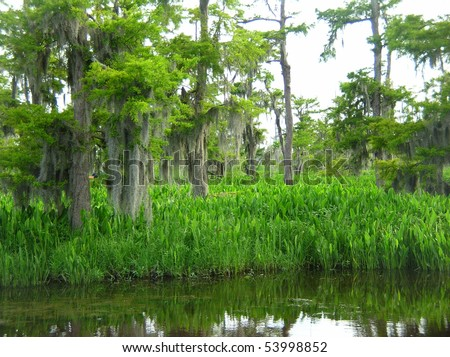 Bayou in the wilderness - stock photo