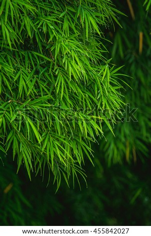 be fresh green Bamboo leaves after the rain - stock photo