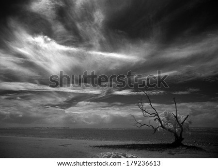 Beach at low tide with mangrove tree - stock photo