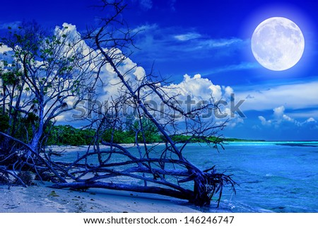 Beach at night with a full moon creating reflections on the ocean and a dead tree trunk near the water - stock photo