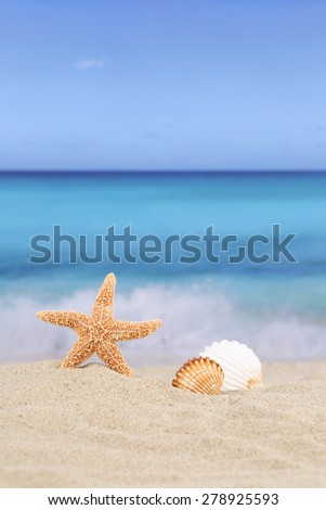 Beach background scene in summer vacation holidays with sand, sea shells and stars, copyspace - stock photo