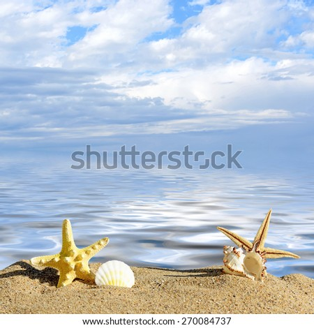 Beach background.Sea shells and starfish on a beach sand. In the background of sea and sky - stock photo