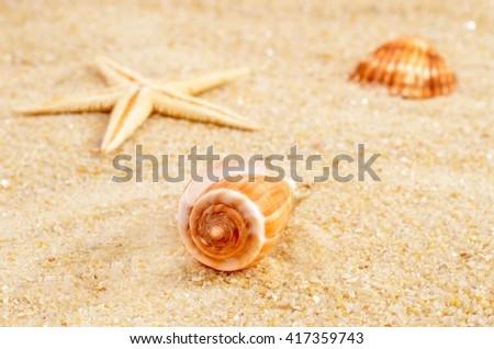 Beach. Beach - summer background. Beach. Beach - summer time. Beach. Beach - background for summer card.Beach.  Beach.with sand and shells. Starfish and shells on beach. Beach. Beach. Beach.  - stock photo