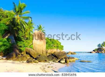 Beach Coconut Nature - stock photo