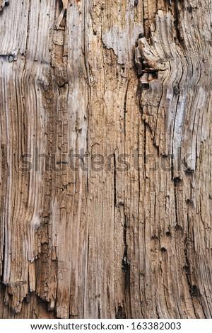 Beach drift wood log texture. - stock photo