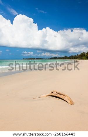 Beach driftwood and dark blue sky - stock photo