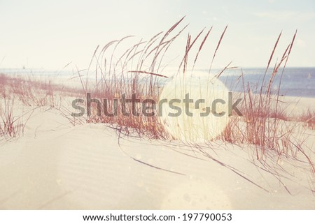 beach grasses on the seashore - stock photo
