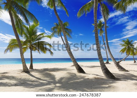 tropical beach with horses stock photos illustrations and