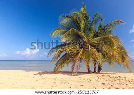 Beach on the tropical island. Clear blue water, sand and palms. Beautiful vacation spot. - stock photo