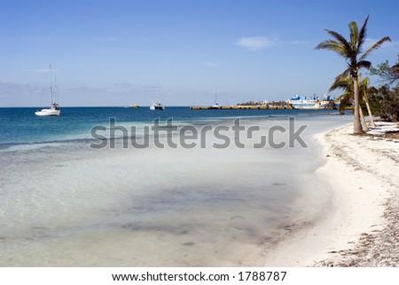 Beach Palm trees - stock photo