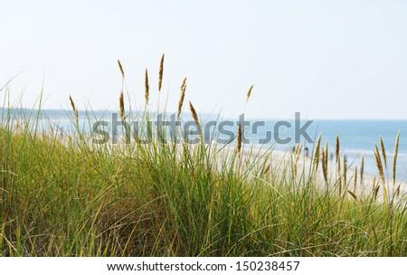 Beach Panorama - stock photo