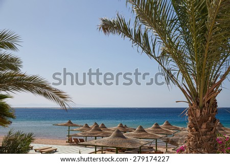 Beach, Red Sea, umbrellas, chaise lounges, branches of date palms against the blue sky, lots of sun - stock photo