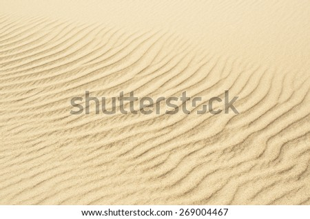 beach sand dunes near the sea. Ideal for golden sand backgrounds and textures - stock photo