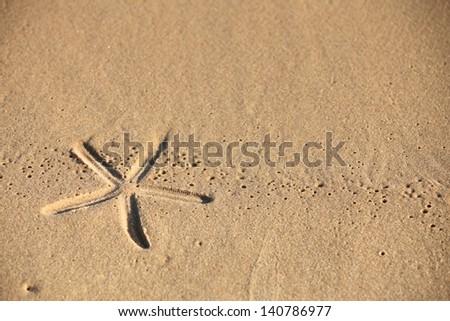 beach sand with starfish print as background - stock photo