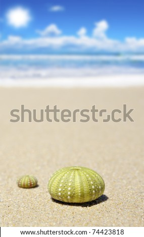 Beach scene with two dead sea urchin shells - stock photo