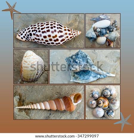 Beach Treasures Montage - stock photo