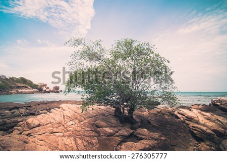 Beach tree rock and blue sea in Thailand vintage - stock photo