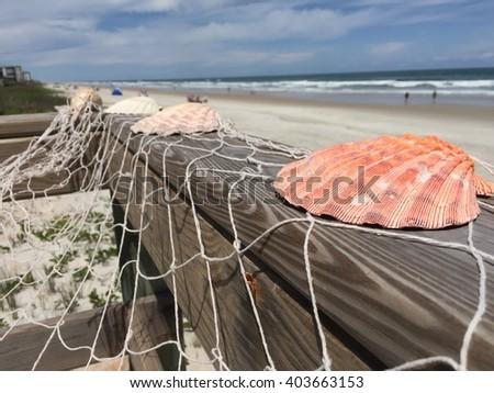 Beach wedding shell decor - stock photo