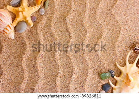 Beach with a lot of seashells and starfish - stock photo