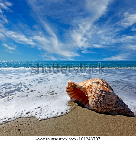 Beach with conch shell under blue sky - stock photo