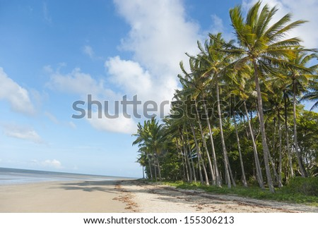 Beach with palm tree jungle at seafront. Tropical Port Douglas, Queensland, Australia - stock photo