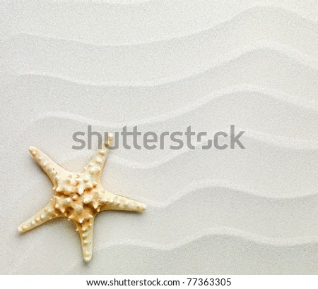 beach with starfish - stock photo