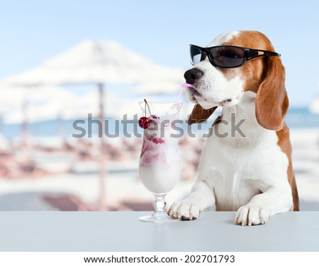 beagle  on a beach - stock photo