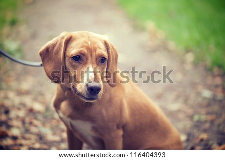 Beagle puppy in the woods - stock photo