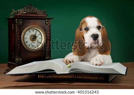 beagle puppy is reading - stock photo