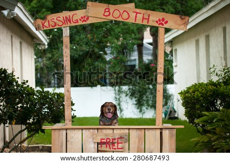 Beagle sitting in a kissing booth - stock photo