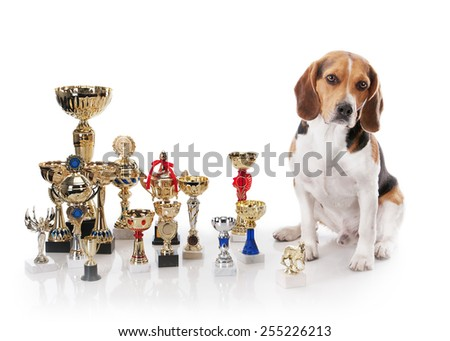 Beagle with the champion trophies on white background - stock photo