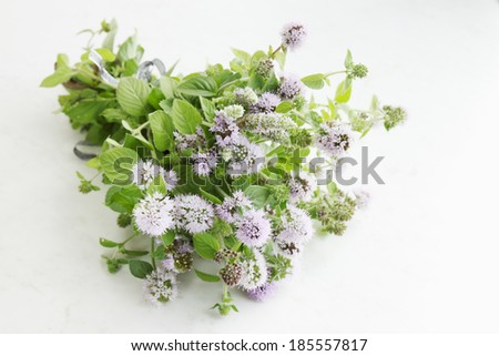 Beam blooming mint knotted ribbon - stock photo