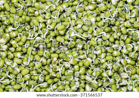 bean sprouts - stock photo