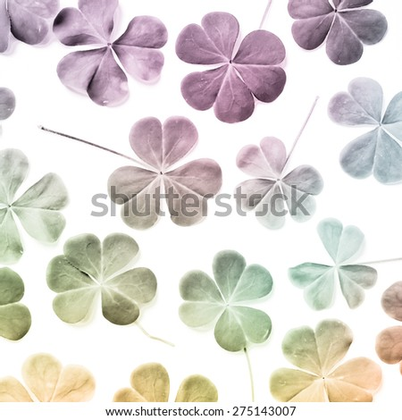 Bear Clover Leaf fancy color of a St. Patrick's Day Background, lucky clover  - stock photo