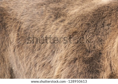 Bear Real Fur Background - stock photo