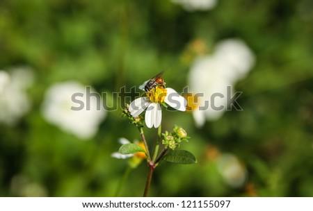 Bearing flowers. - stock photo