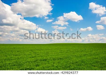 Beatiful morning green field with blue heaven - stock photo