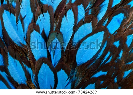 Beautiful abstract background consisting of blue hen saddle feathers - stock photo