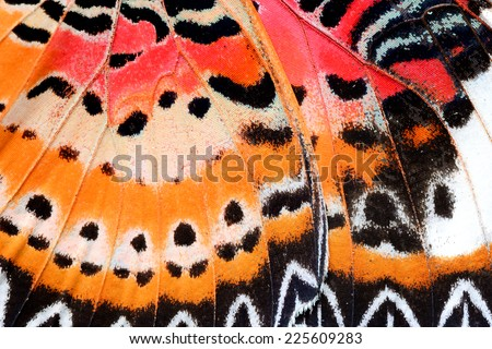 Beautiful abstract background texture,Leopard Lacewing butterfly, Malay Lacewing butterfly wing.(Cethosia cyane) - stock photo