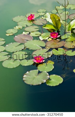 Beautiful abstract water lily - stock photo