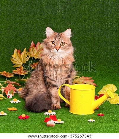 Beautiful adult cat on artificial green grass - stock photo