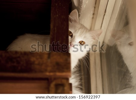 Beautiful adult white Persian cat - stock photo
