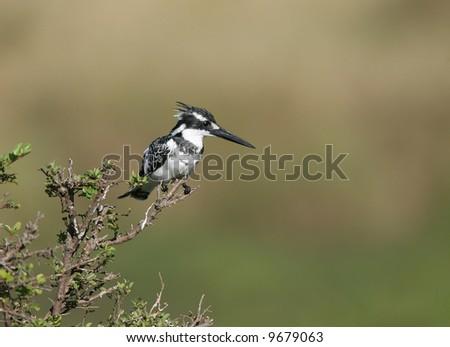 Beautiful African Bird - stock photo