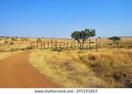 Beautiful african landscape with dirt road and acacia trees in the savannah under warm light at sunset time. Masai Mara national park, Kenya - stock photo