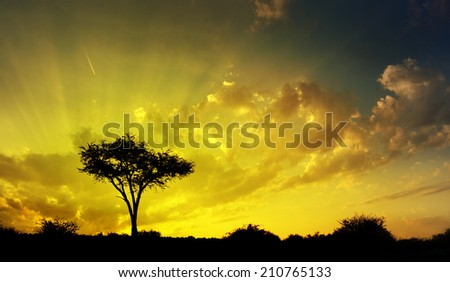 Beautiful African savannah sunset and silhouette of a thorn tree against cloudy sky, meditative zen background - stock photo