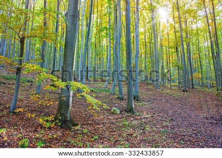 Beautiful afternoon in autumnal forest - stock photo