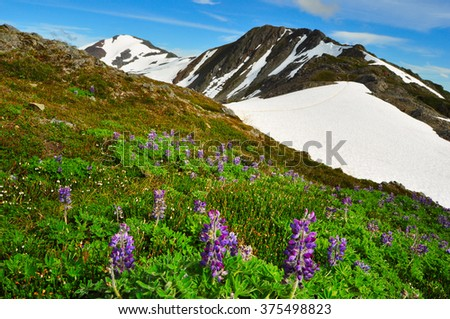 Beautiful Alaskan mountains and landscape in summertime - stock photo
